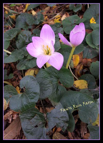 Fawn Run Farm gardens